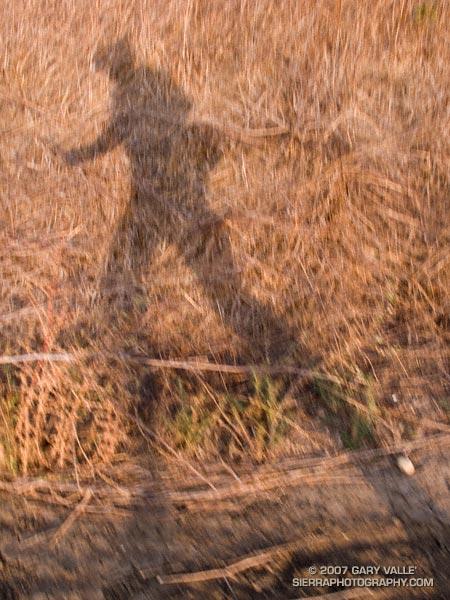 Late afternoon run at Ahmanson Ranch.