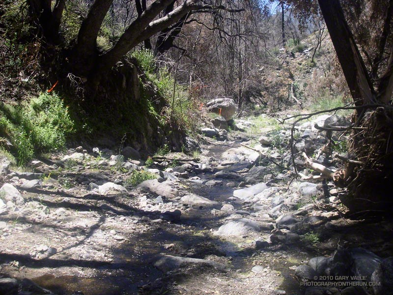 The remnants of the Silver Moccasin Trail in Shortcut Ccanyon at about mile 25. See the orange ribbon on the left by the trees, and then downstream where the trail leaves the streambed?