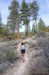 Trail runner on the PCT near Sulphur Springs Road