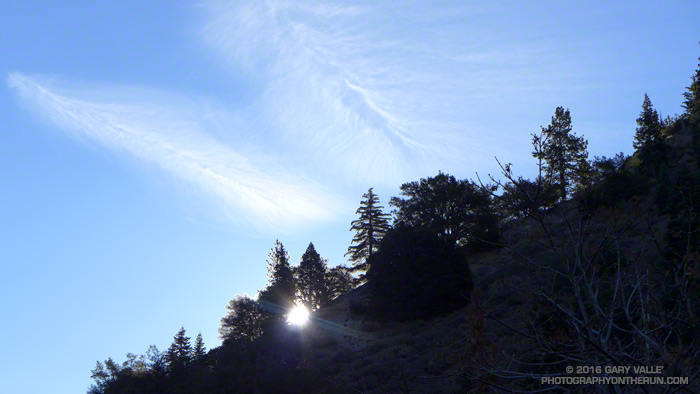 Trees silhouetted by the early morning sun on a ridge above the Manzanita Trail.