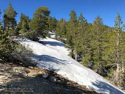 Snow at 8750' near the junction of the PCT and Dawson Saddle Trail in the San Gabriel Mountains, near Los Angeles.