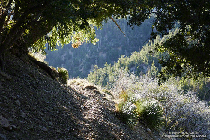 A nice section of the South Fork Trail about a mile below Islip Saddle. The elevation at this point is about 6000'.