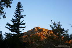 Coast redwood near the Forest Trail and Crags Road junction in Malibu Creek State Park