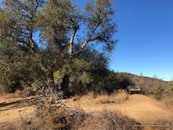 The Oak Tree on the Rogers Road segment of the Backbone Trail