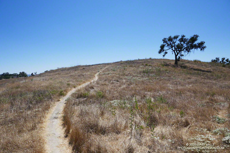 Hot weather on an Ahmanson Ranch Trail.