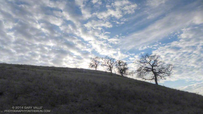 Valley oaks and clouds at Ahmanson Ranch.