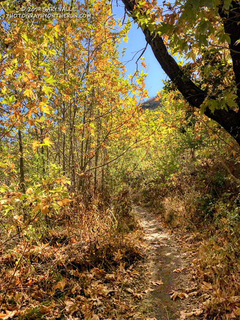 Fall on the Upper Sycamore Trail in Point Mugu State Park