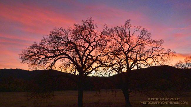 Valley oak sunset