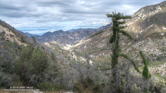 View down Bear Canyon to Arroyo Seco. The bigcone Douglas fir (right of center) is recovering from the 2009 Station Fire.