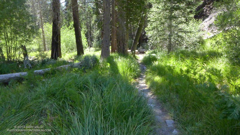 A pleasant section of the Vivian Creek Trail above Vivian Creek Camp. At about 7300' and 20.5 miles into the run.