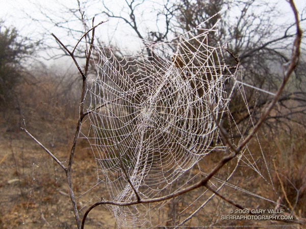 Spider web covered with dew droplets at Sage Ranch Park.