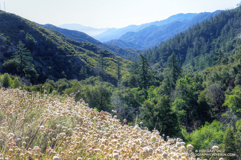View of West Fork canyon from along Rincon - Red Box Road about 1.5 miles below Red Box.