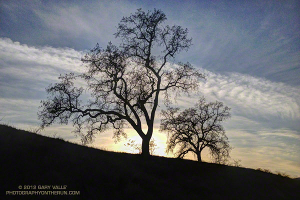 Valley oaks and clouds near sunset