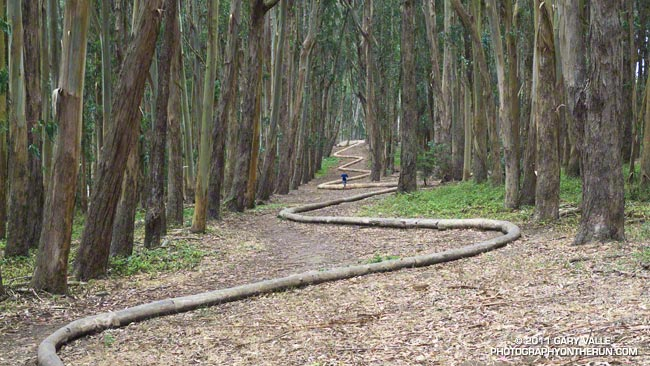 Presidio forest sculpture Wood Line by Andy Goldsworthy