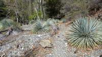 Mine Gulch Trail low in Vincent Gulch.