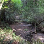 Redwood Creek in Muir Woods National Monument