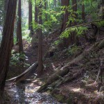 Fern Creek, a tributary of Redwood Creek