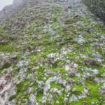 A patchwork of wet, bright green moss and gray-green lichen on the volcanic rock