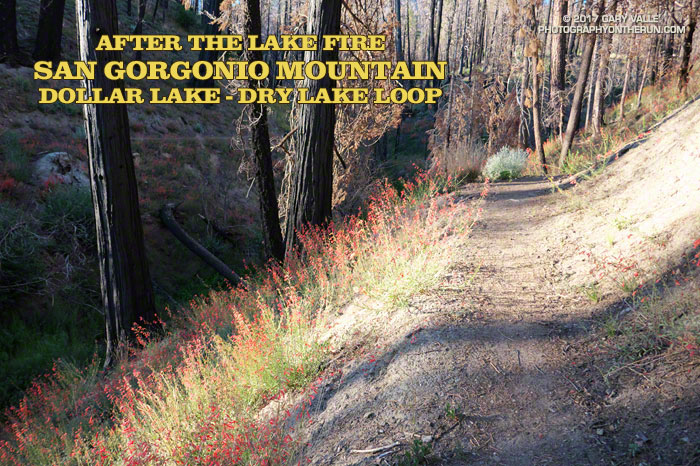 After the Lake Fire: The Dollar Lake - Dry Lake Loop (Slideshow)