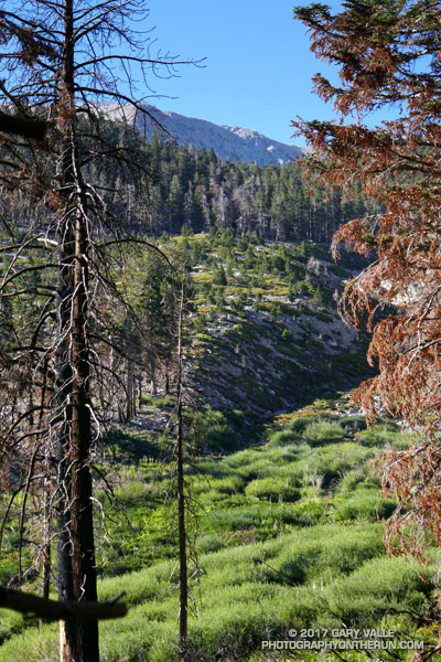 South Fork Meadows from the Dollar Lake Trail on San Gorgonio Mountain.